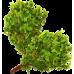Веник березовый
